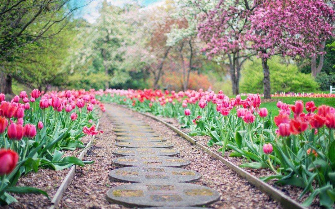 Piękny ogród w krótkim czasie? 6 przydatnych tricków!