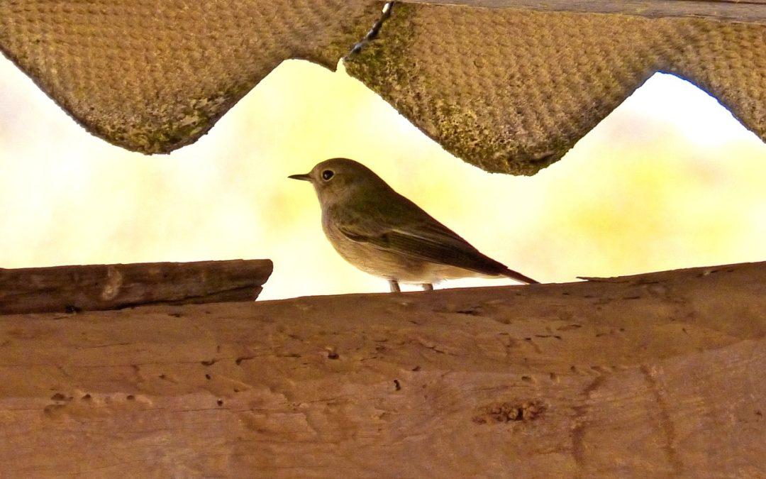 Jak zabezpieczyć dach przed ptakami?